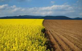 Аренда земельного участка с правом выкупа