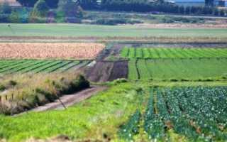 Порядок заключения договора аренды земельного участка сельхозназначения